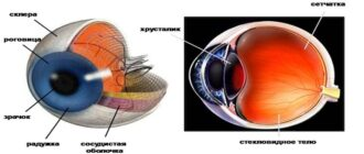 Строение глаза человека